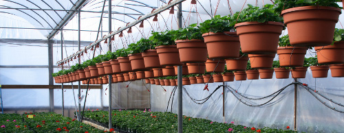 New Trends in Home Greenhouses