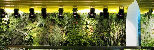 Indoor Gardening Tips and Trends